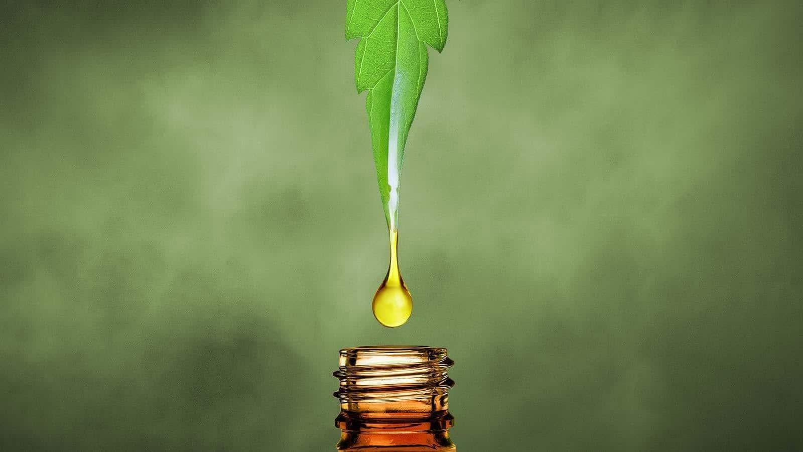 A CBD olaj hatása az emberi testre